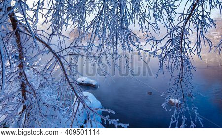 Branch Covered In Ice Cold White Frost In Winter. First Frosts, Cold Weather, Frozen Water, Frost An
