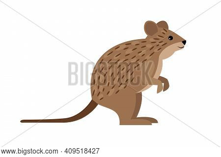 Cute Quokka. Cartoon Funny Exotic Animal, Endangered Fluffy Beast Of Nature, Vector Illustration Of