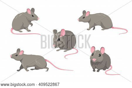 Cartoon Mouse Set. Grey Furry Rodent Little Rat With Pink Hairless Tail Walking Or Sitting Isolated