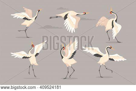 Japanese Crane Set. White Oriental Heron Or Stork, Bird Flying, Dancing Or Walking With Spread Wings