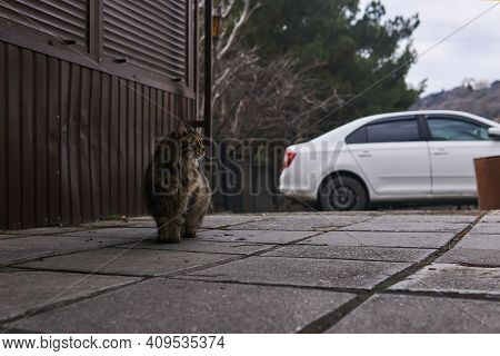 Fluffy Gray Stray Cat In Urban Environment
