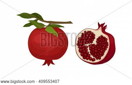 Pomegranate Fruit With Red-purple Husk With Inner, Spongy Mesocarp With Edible Seeds Vector Set