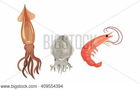 Squid With Tentacles And Shrimp As Seafood And Marine Delicacy Vector Set