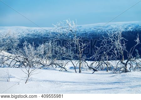 Scandinavian High Plateau In Wintertime. The Panorama Clearly Shows The Border Of The Coniferous For