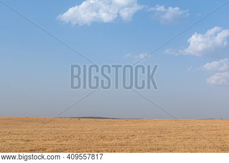 Sheep Grazing Fields And Cereal Cultivation In Southern Andalusia In Spain