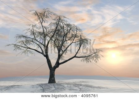 Winter Tree Pastel Sunrise