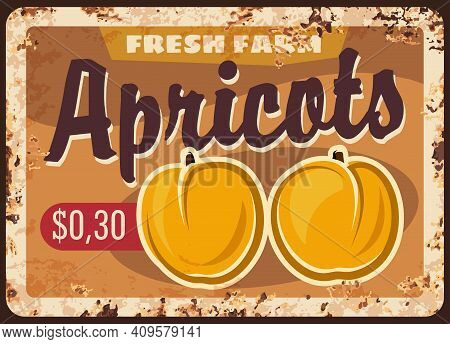 Fruit Farm Apricots Harvest Rusty Metal Plate. Ripe Apricot Or Peach Fruits Hand Drawn Vector. Organ