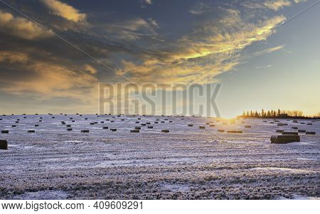 Square Hay Bales On A Winter Harvested Field In The Canadian Prairies At Sunrise.