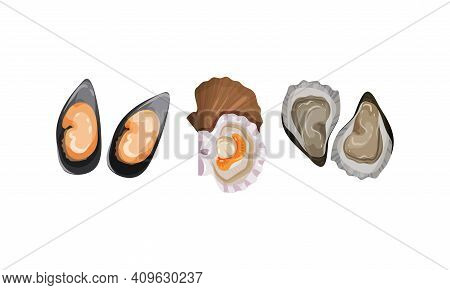 Oyster And Bivalved Mollusk As Seafood And Marine Delicacy Vector Set