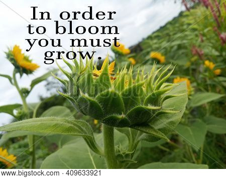 In Order To Bloom You Must Grow. Inspirational Motivational Quote Concept With Young Green Sunflower