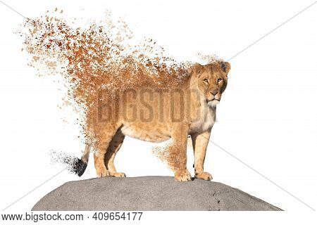 Dispersing Lioness Watching From A Rock, Isolated On White