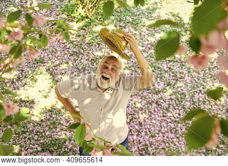 Happy Old Age. Cheerful Pensioner. Mental Health. Happy Man Under Sakura Tree Looking Upwards. Happy