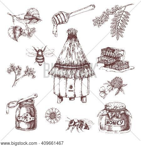 Honey Elements Hand Drawn Set With Bees And Hive Combs Branches Of Trees Herbs Isolated Vector Illus