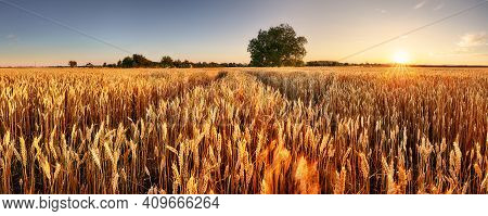 Wheat Field. Ears Of Golden Wheat Close Up. Beautiful Rural Scenery Under Shining Sunlight And Blue
