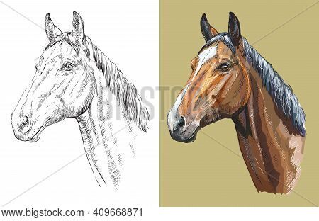 Realistic Head Of Trakehner Horse. Vector Black And White And Colorful Isolated Illustration Of Hors