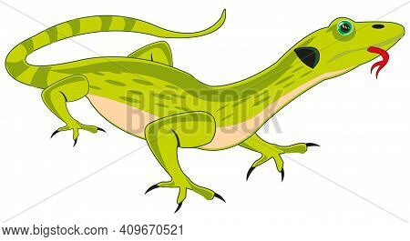 Reptile Animal Lizard On White Background Is Insulated