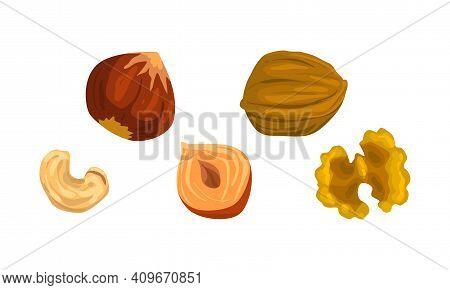 Nut Collection, Walnut, Cashew, Hazelnut Nuts, Nutritious Vegetarian Food Ingredients Cartoon Vector