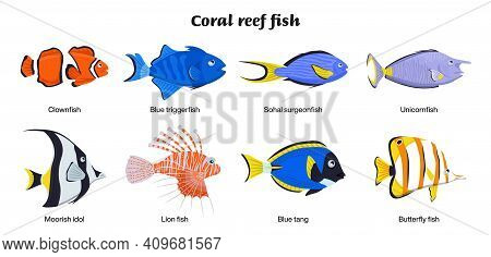 Coral Reef Inhabitants. Endangered Fish Species. Threatened Fish Stocks. Clownfish, Blue Triggerfish