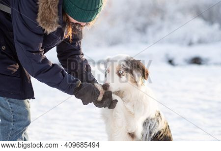 Woman Holding Australian Shepherd Dog Paw With Icy And Salty Chunks