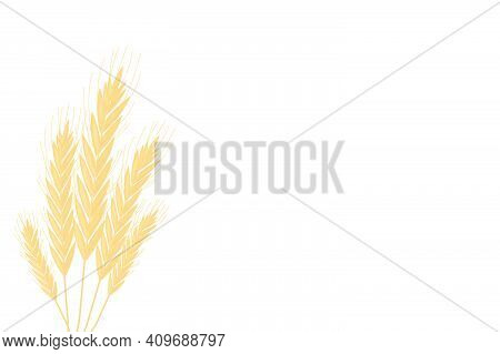 Yellow Spikelets Growth On The Farm Field Backgound