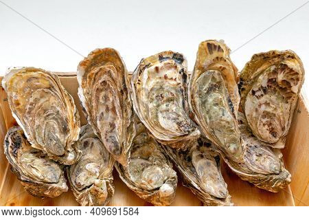 Fresh Bivalve Oysters In Wooden Crate Seafood