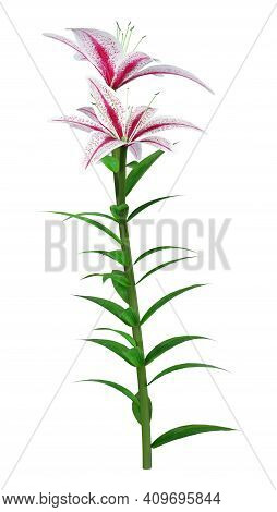 3D Rendering Stargazer Asiatic Lily On White