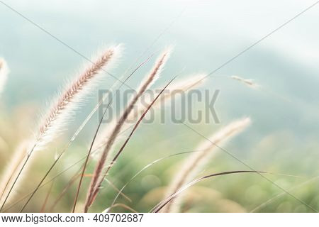 Green Grass Background Flowers On The Mountain