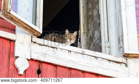 Tabby Cat Watching From The Old Window
