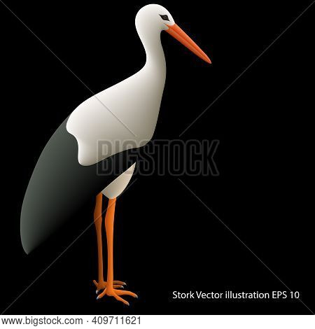 Realistic Drawing Of A Standing Stork On A Black Background, Full Size, Isolated, Close Up. Vector I