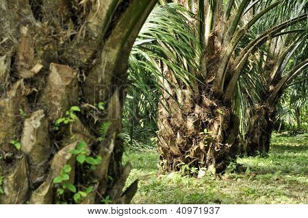 Palm Crop Day Outdoor Farm
