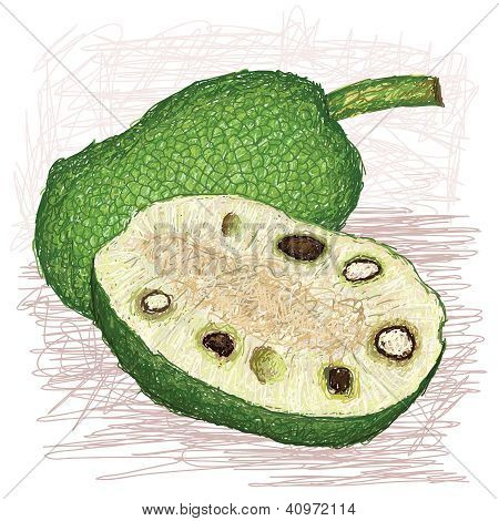 Breadfruit Seeded Variety Whole And Half Sliced