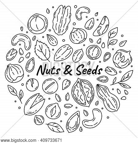 Nuts And Seeds Outline Set Of Vector Icons In The Doodle Style. Walnuts, Macadamia And Peanuts Isola