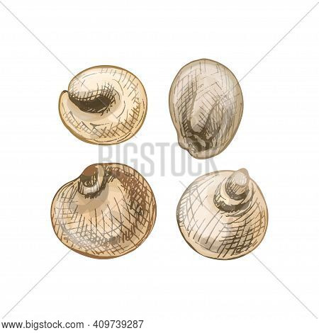 Grains Of Sorghum. Vector Color Vintage Hand Drawn Hatching Illustration Isolated On A White Backgro