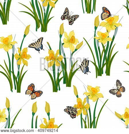 Pattern With Daffodils And Butterflies.daffodils And Multicolored Butterflies On A White Background