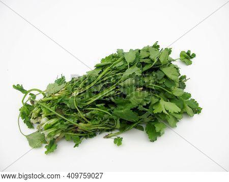 Fresh Green Bunch Of Coriander On A White Background