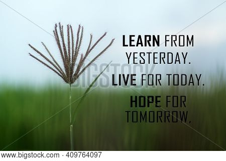 Inspirational Words - Learn From Yesterday. Live For Today. Hope For Tomorrow. With Wild Grass Flowe