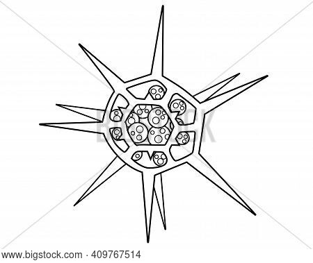 Dictyocha - Microscopic Unicellular Plant Algae - Vector Line Picture For Coloring. Outline. Microor