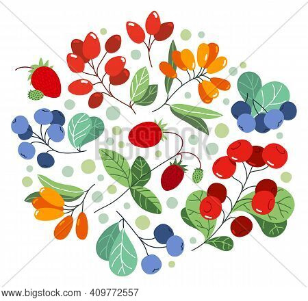 Wild Berries Fresh And Ripe Tasty Healthy Food Vector Flat Style Illustration Isolated Over White, D