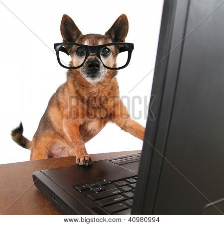 a dog surfing the internet