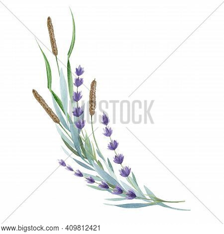 Lavender Flowers And Wild Herbs. Organic Lavandula Herb Stems With Buds And Green Leaves Watercolor