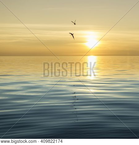 Seagull Silhouette Above The Sea At Colorful Sunset. Idea Of Harmony And Tranquility.