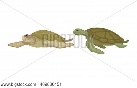 Turtles With Bony Shell As Fresh-water Testudine With Fins Vector Set