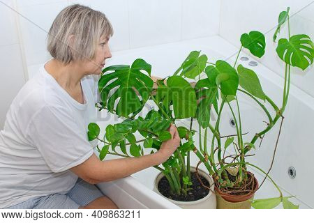 Gardening Home. Taking Care Of The House And Clean Air At Home. Woman Waters And Washes Green Plants