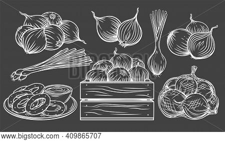 Onion Outline Drawn Monochrome Icon Set On Blackboard. White On Black Pile Of Onion Bulbs, Packed In