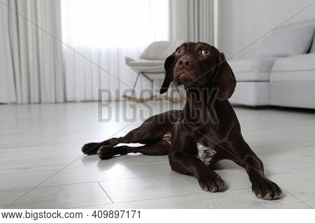 Cute German Shorthaired Pointer Dog Resting On Warm Floor, Space For Text. Heating System