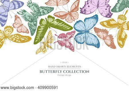 Design With Pastel Colored Ambulyx Moth, Madagascan Sunset Moth, Forest Mother-of-pearl, Great Orang