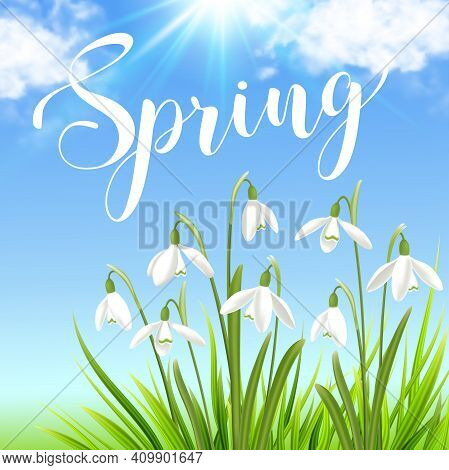 White Snowdrops And Green Grass On A Blue Sky Background. Spring Floral Background. Vector Illustrat