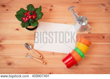 Empty Card For Your Text, Gardening Tools, Colorful Flower Pots And Primula Flower On Wooden Backgro