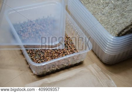 Close Up Wet Seeds On Linen Growing Mat In Plastic Bowl With Lid. Kit For Growing Microgreens At Hom