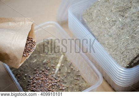 Preparation For Growing Microgreens At Home: Linen Substrate, Seeds And Plastic Bowls. Close Up Seed